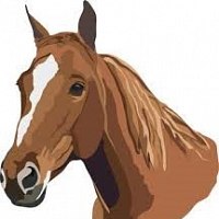 Riding Camp Instructor's Horsemanship Safety Clinic
