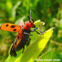 UConn Extension's Bug Week