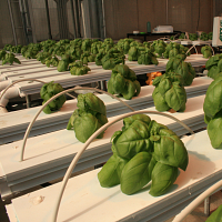 Practical Applications in Greenhouse Nutrient Management