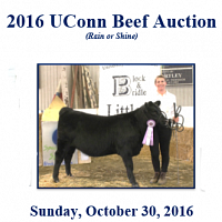 UConn Beef Auction