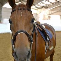 Winter Horseback Riding Lessons Registration Open