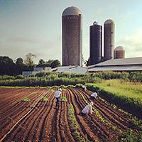 Food Systems Strategies for Economic Development