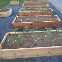 UConn Master Gardener Program
