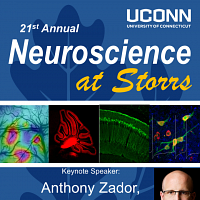 Neuroscience at Storrs