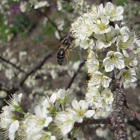 Traits That Make Plants Irresistible to Pollinators