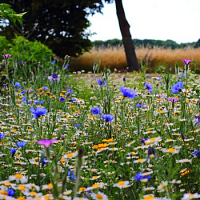 Grow Your Own Meadow, Large & Small
