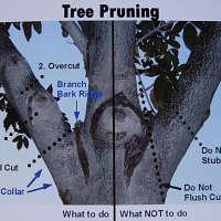 Real Hands-On Pruning Workshop