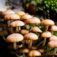 Introduction to Wild Mushrooms & Fungi
