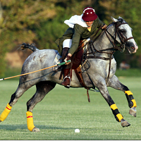 The History of Polo at UConn