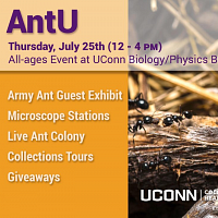 AntU Bug Week Events