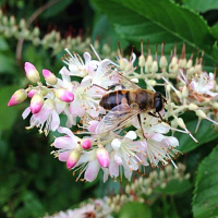 Native Plants and Pollinators Conference
