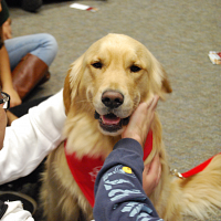 Pet Therapy at the Rainbow Center
