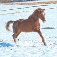 UConn Winter Horseback Riding Registration is Open!