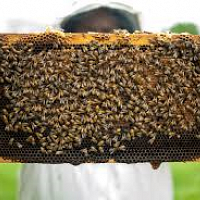 S20/18   The Plain Truth About Beekeeping