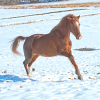Come Ride With Us: Winter Horseback Riding Practicum