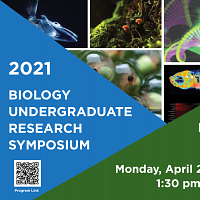 Biology Undergraduate Research Symposium